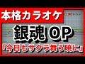 【フル歌詞付カラオケ】今日もサクラ舞う暁に(CHiCO with HoneyWorks)【銀魂OP】