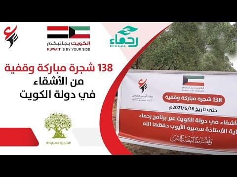 138 شجرة زيتون وقفية من دولة الكويت الشقيقة