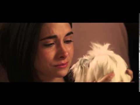 The Dog Lover - Official 15 Second Trailer HD - Trailer Puppy