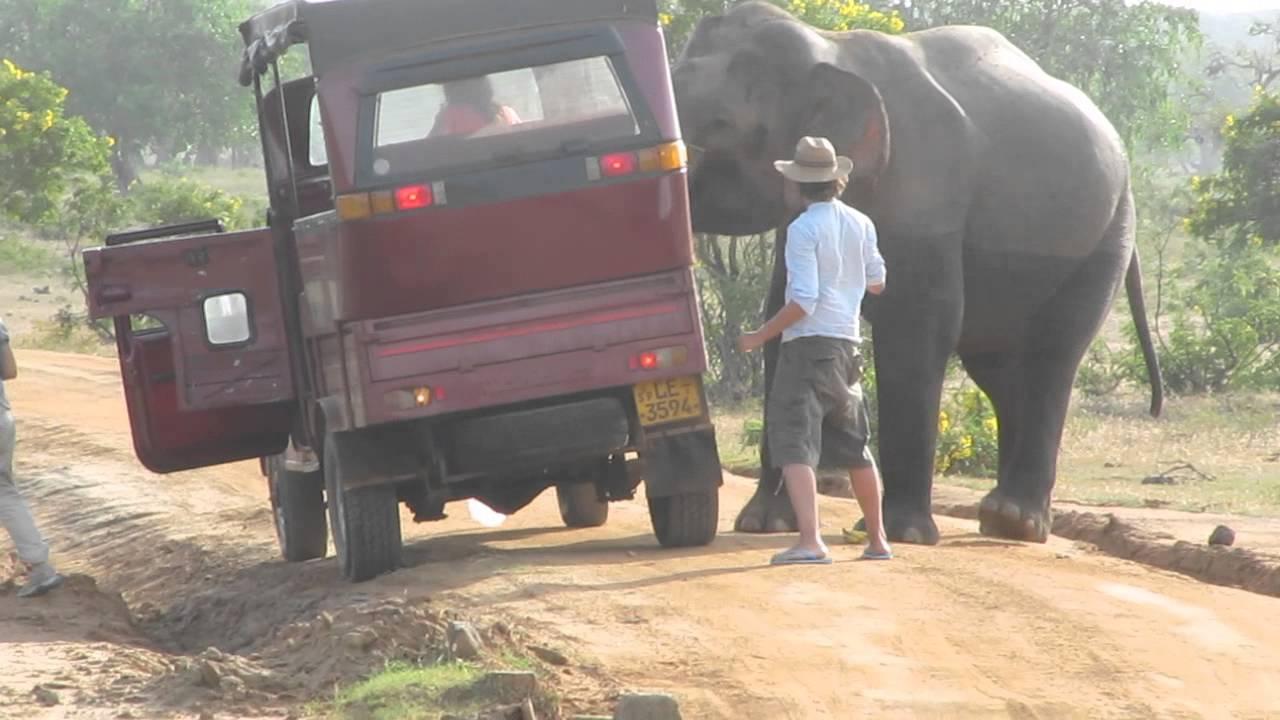 Sri Lanka Yala National Park Elephant Youtube