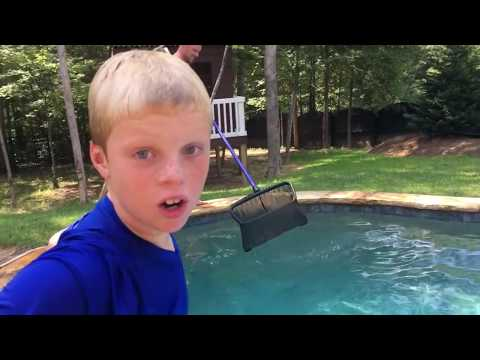 SNAKES IN THE POOL AGAIN? Are you kidding me??