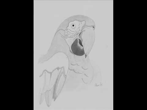 dibujos a lapiz de animales  YouTube