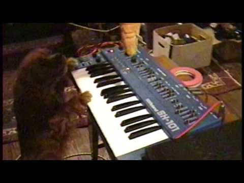 Molly the Dog Plays a Synthesizer with Serge from System Of A Down