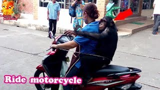 Chimpanzee escapes from cage to sit back motorcycle