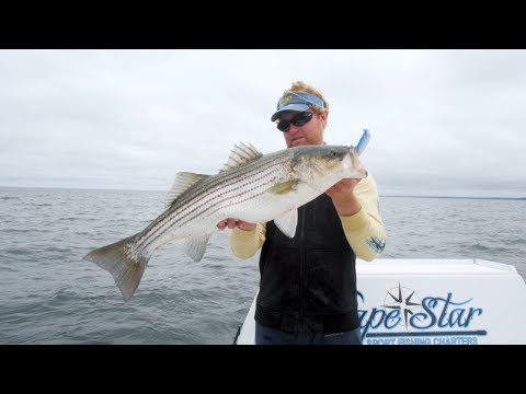 Striper Fishing In Cape Cod Bay With Capt. Cullen Lundholm