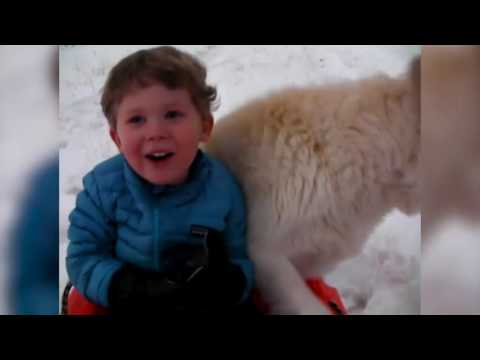 Dogs First Snow! Cute Compilation!