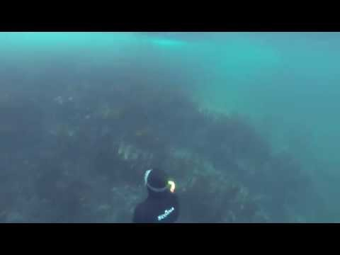free diving in Barents sea 10m