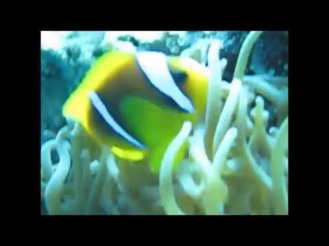 Changing Sex Phenomenon In Clownfish