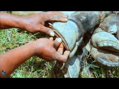 Short Film 'Laadam' The Horseshoe