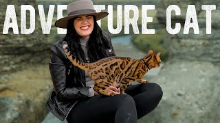 BENGAL Cat ADVENTURE Vlog || What it's ACTUALLY Like WALKING A CAT!