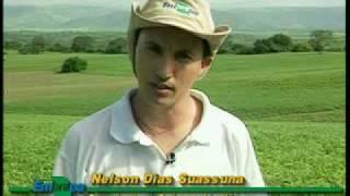 Dia de Campo na TV - Segurança e qualidade na produção de amendoim