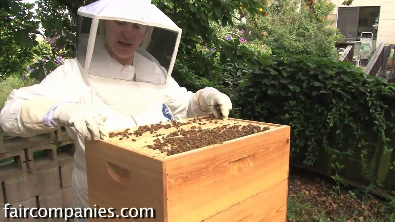 The Magic Of Urban Beekeeping: A Backyard San Francisco Hive   YouTube