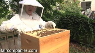 The magic of urban beekeeping: a backyard San Francisco hive