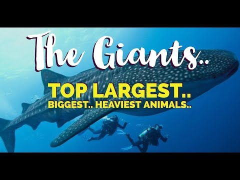 The Giants - Meet the biggest animals in the world