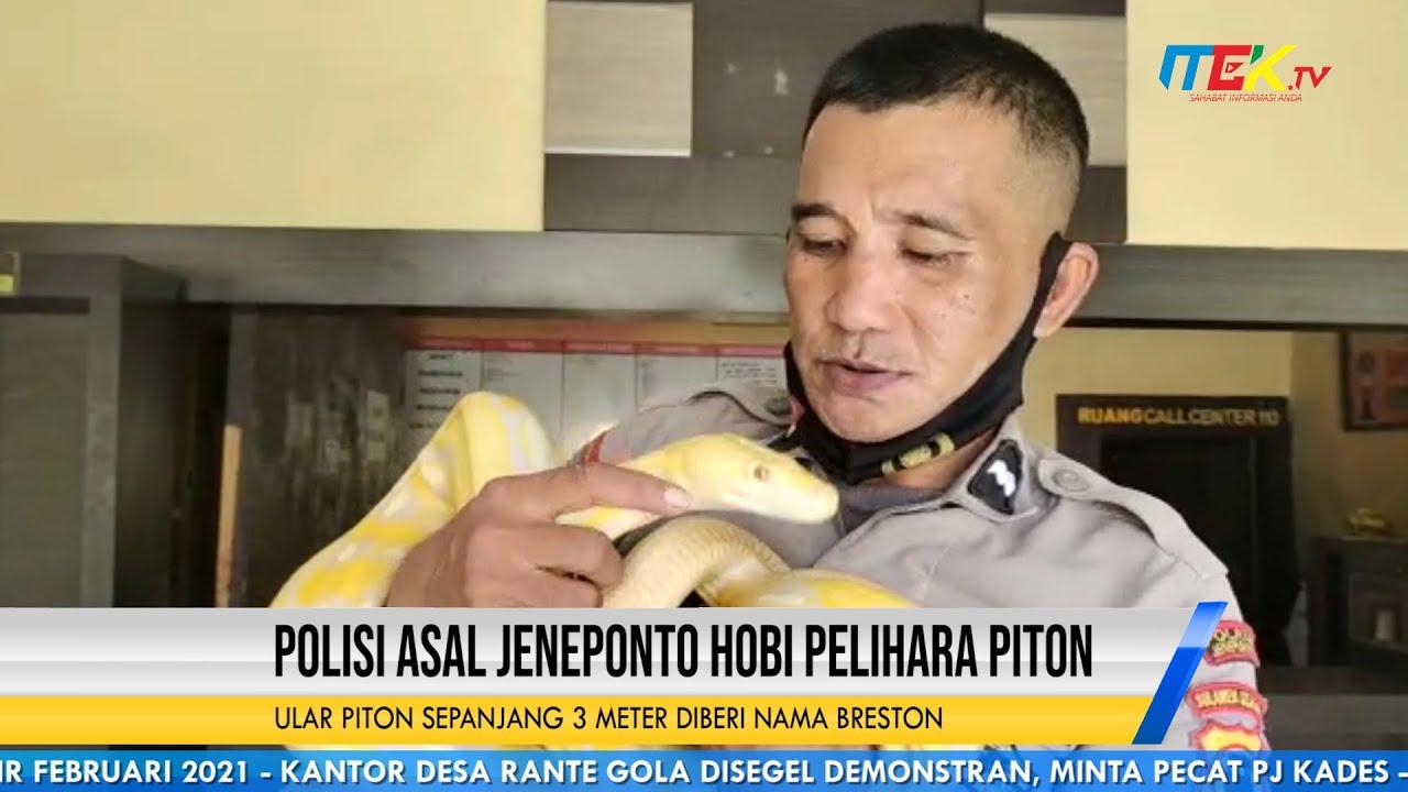 Polisi Asal Jeneponto Hobi Pelihara Piton