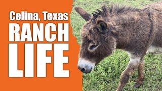Celina Texas Ranch Life With Cadillac & Laredo