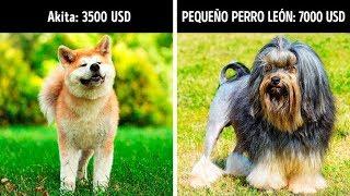 20 Perros adorables que cuestan una fortuna