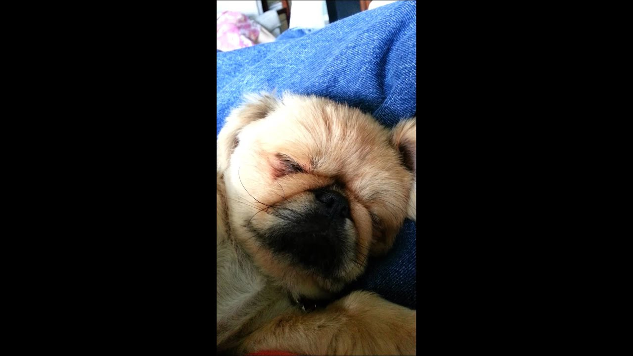 how to stop a dog from snoring