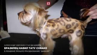 Бразилец набил тату собаке