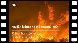 Varför brinner det i Australien?