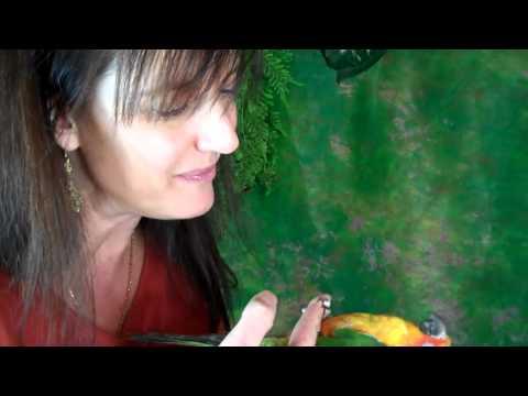 Pet Shop Parrot Antics: Baby Sun Conure parrot for sale in Binghamton, NY