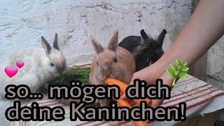 So kriegst du es hin, dass deine Kaninchen dich mögen!💕🐇