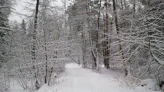 Ужасы в лесах Чернобыля/Haunted Forest
