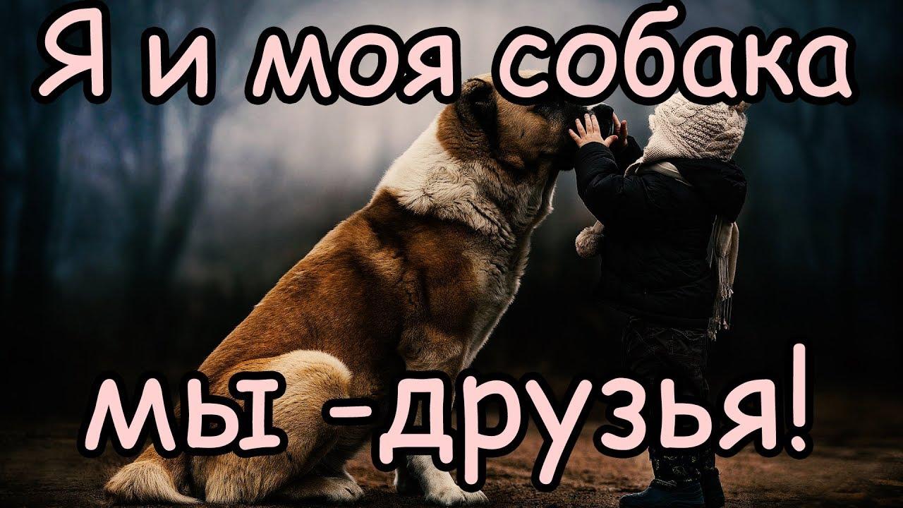 Собака лучший друг человека (причины) [Почему собака ...