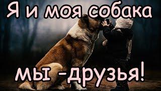 Собака лучший друг человека (причины) [Почему собака лучший друг человека]