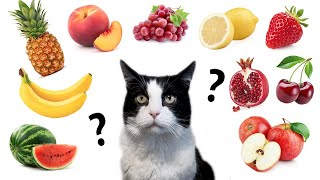 Do cats eat fruit and berries? TOP 10 Test Drive !!