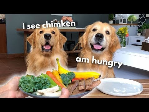 Dog Reviews Food With Grandpa   Tucker Taste Test 13