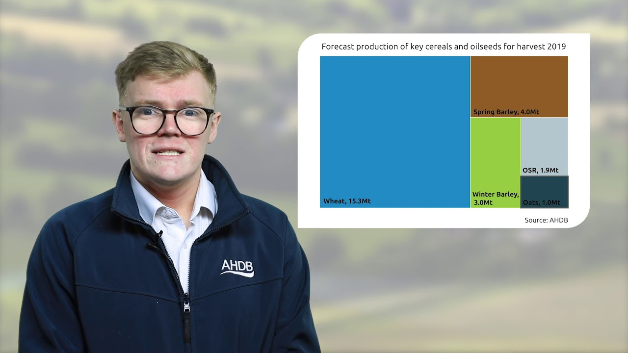 Cereals and Oilseeds markets | AHDB