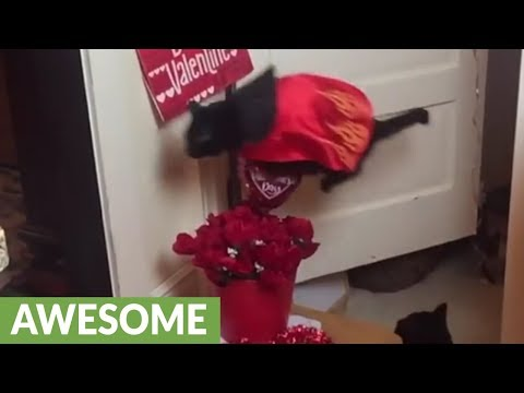 Epic montage of jumping cat's highest leaps