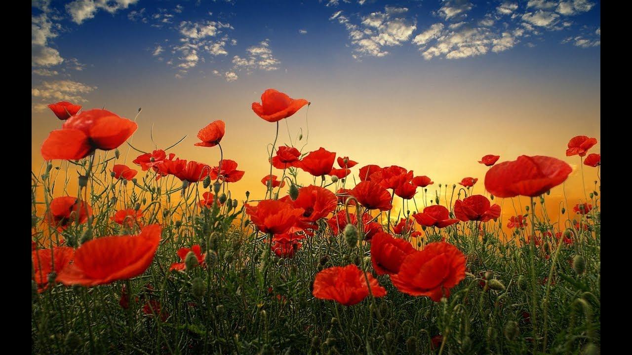 Explosión primaveral: 20 campos en flor que invitan a viajar
