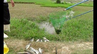 thấy cá bơi ngược dòng mang kích điện ra bắt được toàn cá chuối với rô phi 8f thịnh phạm0943236639.