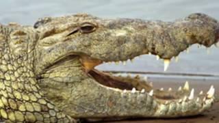 3 ตำนานจระเข้ยักษ์ในประเทศไทย