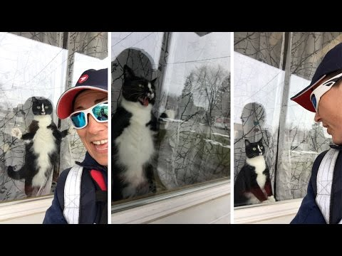 Cat Attacks Window Whenever It Spots Postwoman