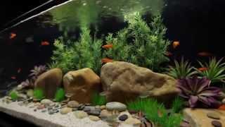 Current Usa - Satellite Plus Freshwater Flexible Led Aquarium Light Strip | Big Al's