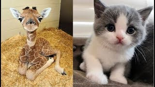 Download Cute baby animals Videos Compilation cute moment of the animals - Soo Cute! #23 Mp3 and Videos
