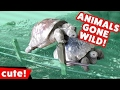 Funniest Animals Gone Wild Humping Compilation | Kyoot Animals ...