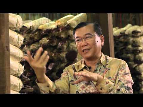 Ganoderma in Spirulina-koristi in stranski učinki. Super intervju z Dr. Lim SLO podnapisi