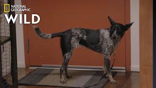 The Affection Junkie Dog   Dog: Impossible