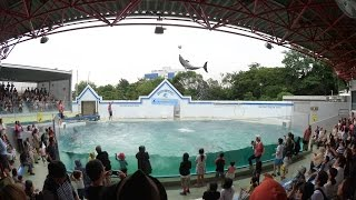 2015.8.29 しながわ水族館で「しな水の夏。」として行われた「ドルフィ...