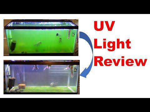 AA Aquarium Green Killing Machine (UV Sterilizer Light): Review + Result
