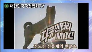 [영상실록] 다큐멘터리 MBC 진도산 진돗개의 현주소 …