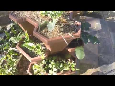 Home Edible Garden Tour : Vegetables in winter Australia