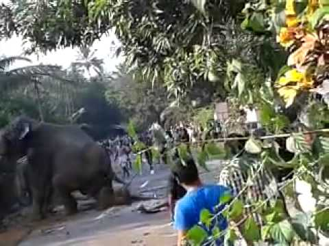 Kerala elephant attack youtube - photo#5