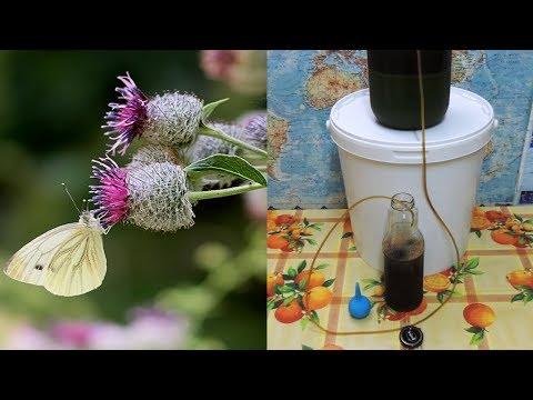 Сок 🍃 лопуха - для обмена веществ. Изготовление и хранение. Arctium Lappa L.