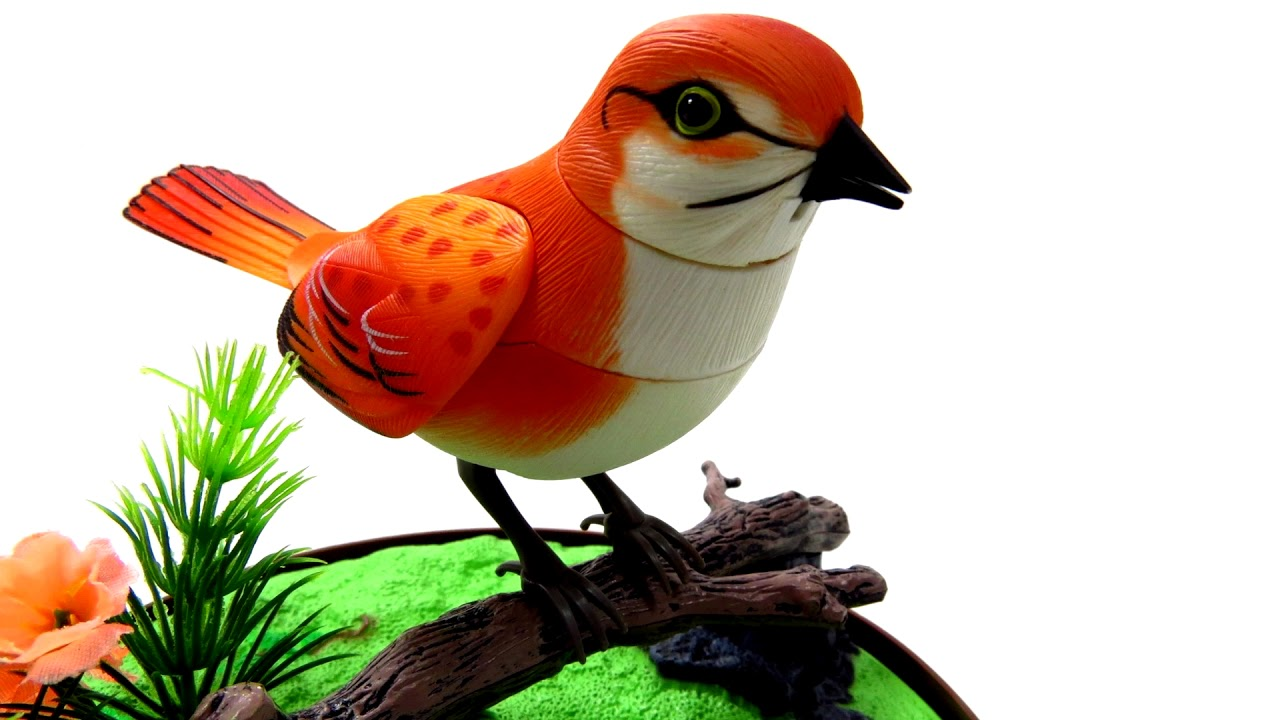 Bird Sound Ringtone Free Mp3 Ringtones Downloads