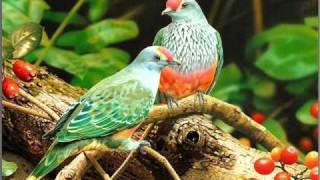 คู่นก (เดิม ชื่อเพลงขาดรัก)--- อริสมันต์ พงษ์เรืองรอง.wmv